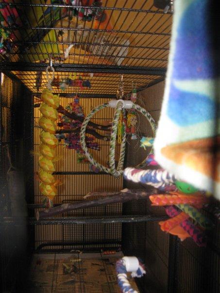 Conure Cage Setup