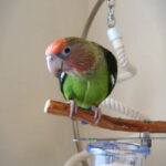 Thumbnail image for Bird Cages: Cape Parrot Cage Set-Up