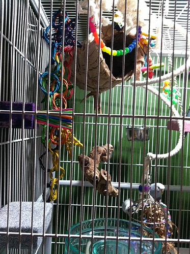 Parrot Cage Olx. . . A And E Cage Co. Green Pacific ...