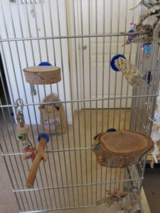 Assorted perches for budgerigars