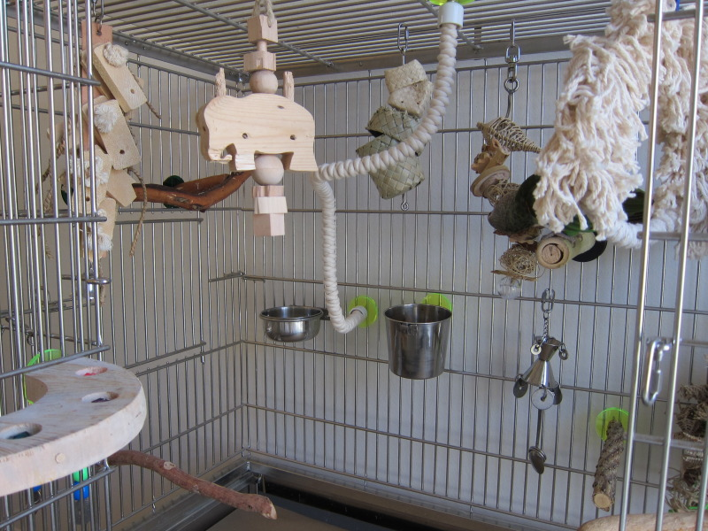 Discount Bird Toys : Bird cages: cape parrot cage set up discount parrot supplies